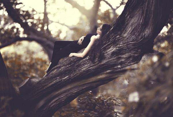 Лиана — тропическое дерево