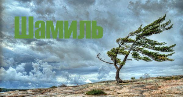 Надпись Шамиль на фоне природы