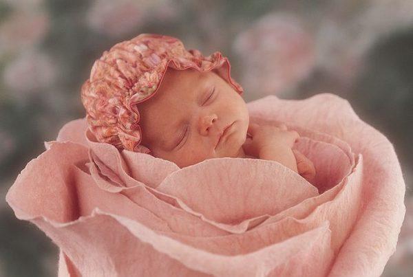 Ребёнок в розе