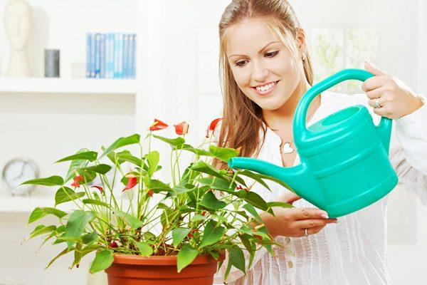 Девушка поливает домашнее растение