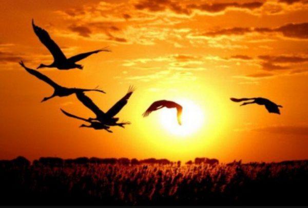 Фото: журавли в закатном небе