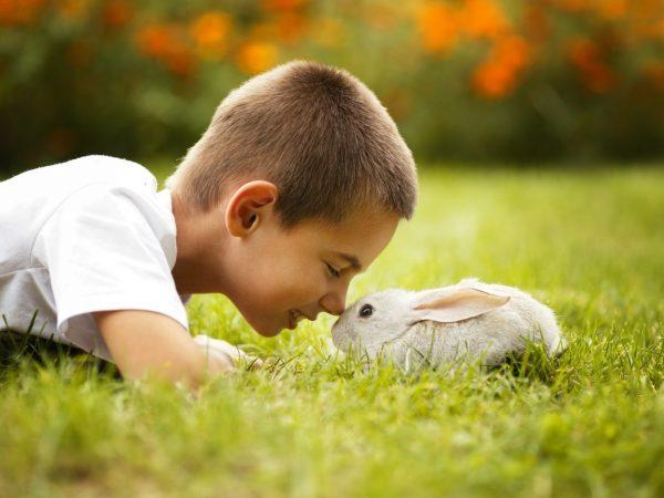 Мальчик с кроликом